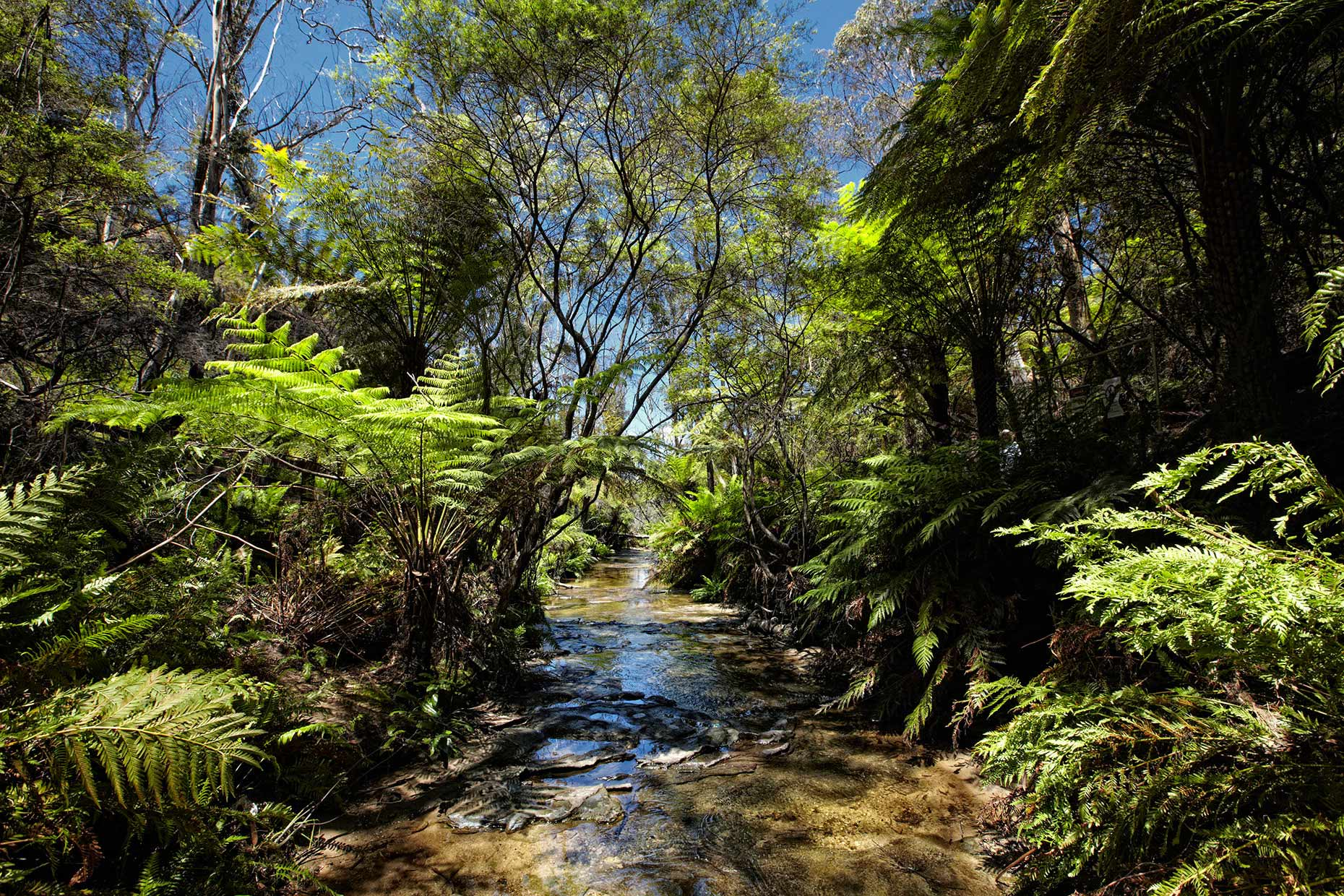 australie-down-under-blue-mountains-sydney_forest.jpg