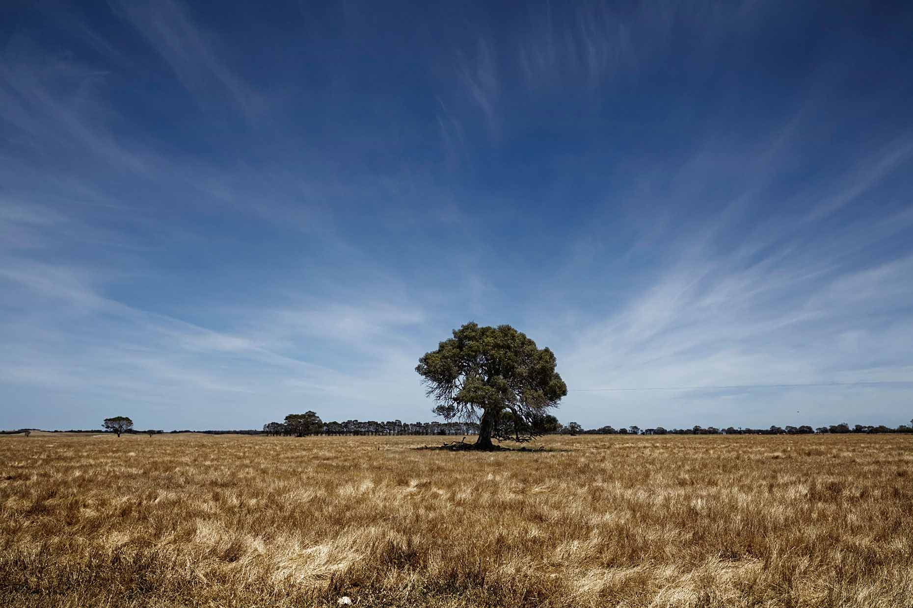 australie-down-under-victoria-road-trip-western-highway_tree.jpg